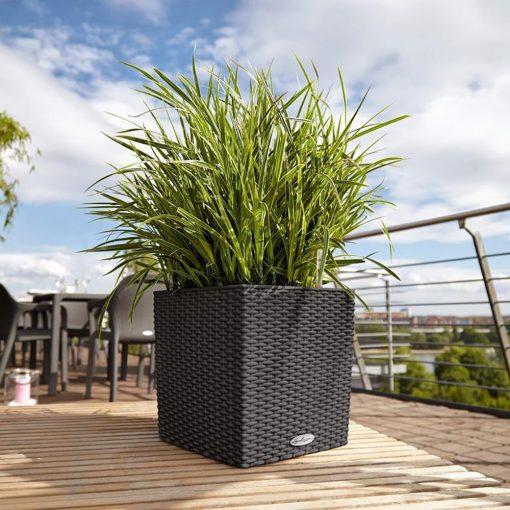 CUBE COTTAGE   Φυτώρια/Γεωπονικές Επιχειρήσεις Χορομίδης: γλάστρες, φυτά, καρποφόρα, αειθαλή, φυτοχώματα, λιπάσματα, εργαλεία και είδη κήπου   Horomidis Agronomic Corp. Flower pots, plants, garden utensils and supplies, evergreens, fruit trees, fertilizer, soil