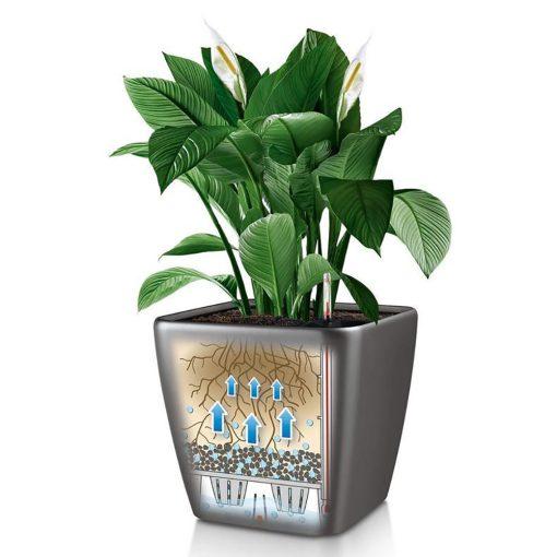 Quadro ls | Φυτώρια/Γεωπονικές Επιχειρήσεις Χορομίδης: γλάστρες, φυτά, καρποφόρα, αειθαλή, φυτοχώματα, λιπάσματα, εργαλεία και είδη κήπου | Horomidis Agronomic Corp. Flower pots, plants, garden utensils and supplies, evergreens, fruit trees, fertilizer, soil