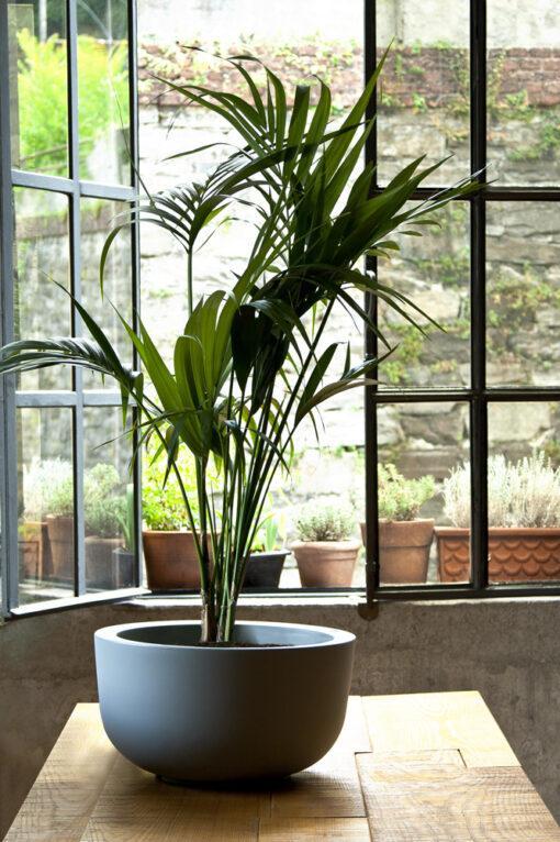 cup| Φυτώρια/Γεωπονικές Επιχειρήσεις Χορομίδης: γλάστρες, φυτά, καρποφόρα, αειθαλή, φυτοχώματα, λιπάσματα, εργαλεία και είδη κήπου | Horomidis Agronomic Corp. Flower pots, plants, garden utensils and supplies, evergreens, fruit trees, fertilizer, soil