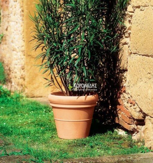 doppio bordo| Φυτώρια/Γεωπονικές Επιχειρήσεις Χορομίδης: γλάστρες, φυτά, καρποφόρα, αειθαλή, φυτοχώματα, λιπάσματα, εργαλεία και είδη κήπου | Horomidis Agronomic Corp. Flower pots, plants, garden utensils and supplies, evergreens, fruit trees, fertilizer, soil