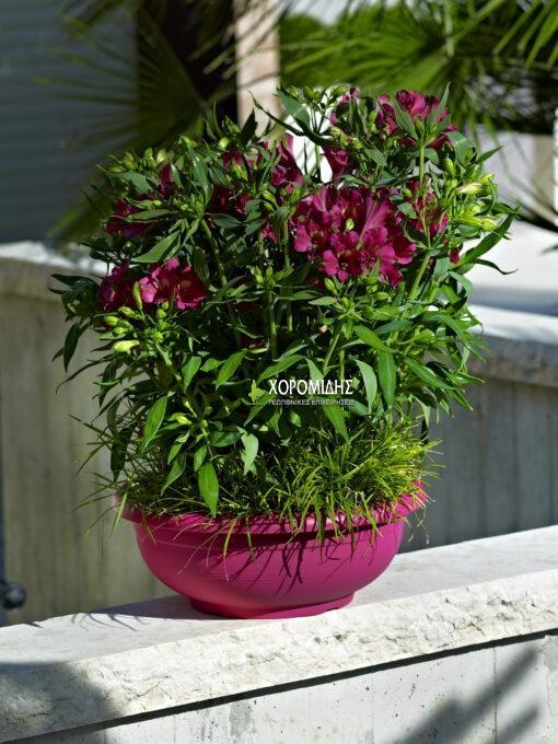 ciotola olimpo| Φυτώρια/Γεωπονικές Επιχειρήσεις Χορομίδης: γλάστρες, φυτά, καρποφόρα, αειθαλή, φυτοχώματα, λιπάσματα, εργαλεία και είδη κήπου | Horomidis Agronomic Corp. Flower pots, plants, garden utensils and supplies, evergreens, fruit trees, fertilizer, soil