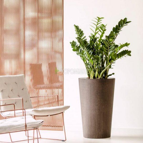 arc Φυτώρια/Γεωπονικές Επιχειρήσεις Χορομίδης: γλάστρες, φυτά, καρποφόρα, αειθαλή, φυτοχώματα, λιπάσματα, εργαλεία και είδη κήπου   Horomidis Agronomic Corp. Flower pots, plants, garden utensils and supplies, evergreens, fruit trees, fertilizer, soil