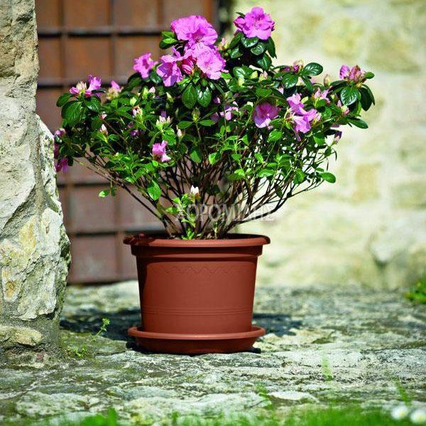 VASO GEO| Φυτώρια/Γεωπονικές Επιχειρήσεις Χορομίδης: γλάστρες, φυτά, καρποφόρα, αειθαλή, φυτοχώματα, λιπάσματα, εργαλεία και είδη κήπου | Horomidis Agronomic Corp. Flower pots, plants, garden utensils and supplies, evergreens, fruit trees, fertilizer, soil