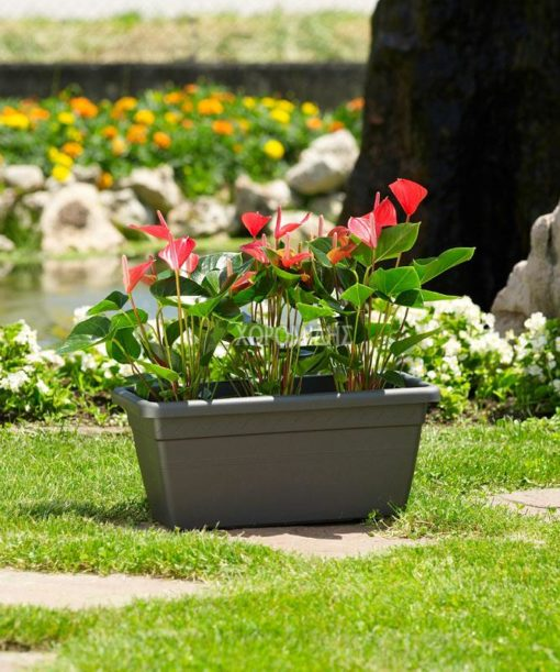 cassetta akea| Φυτώρια/Γεωπονικές Επιχειρήσεις Χορομίδης: γλάστρες, φυτά, καρποφόρα, αειθαλή, φυτοχώματα, λιπάσματα, εργαλεία και είδη κήπου | Horomidis Agronomic Corp. Flower pots, plants, garden utensils and supplies, evergreens, fruit trees, fertilizer, soil