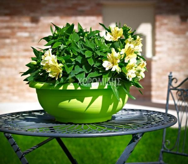 CIΟTOLA OLIMPO| Φυτώρια/Γεωπονικές Επιχειρήσεις Χορομίδης: γλάστρες, φυτά, καρποφόρα, αειθαλή, φυτοχώματα, λιπάσματα, εργαλεία και είδη κήπου | Horomidis Agronomic Corp. Flower pots, plants, garden utensils and supplies, evergreens, fruit trees, fertilizer, soil