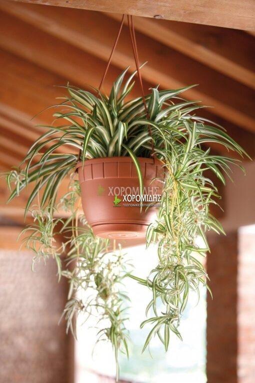 BASKET SIENA| Φυτώρια/Γεωπονικές Επιχειρήσεις Χορομίδης: γλάστρες, φυτά, καρποφόρα, αειθαλή, φυτοχώματα, λιπάσματα, εργαλεία και είδη κήπου | Horomidis Agronomic Corp. Flower pots, plants, garden utensils and supplies, evergreens, fruit trees, fertilizer, soil