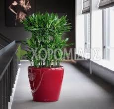 classico Φυτώρια/Γεωπονικές Επιχειρήσεις Χορομίδης: γλάστρες, φυτά, καρποφόρα, αειθαλή, φυτοχώματα, λιπάσματα, εργαλεία και είδη κήπου | Horomidis Agronomic Corp. Flower pots, plants, garden utensils and supplies, evergreens, fruit trees, fertilizer, soil